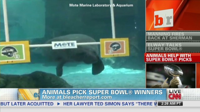 Bleacher Report 1/31 Animals pick SB_00003410.jpg