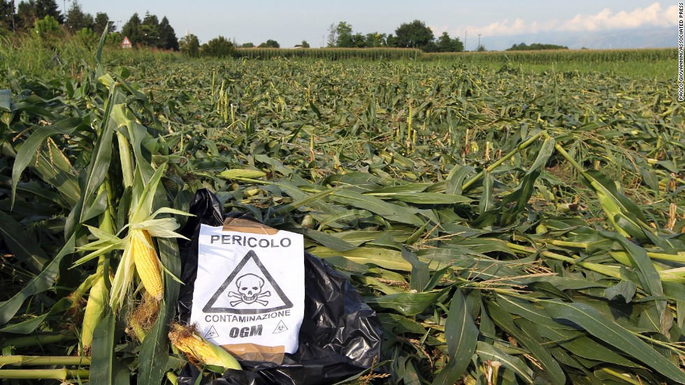 "A sign, ""Danger, GMO contamination,"" is posted by almost an acre of nearly mature GM corn that earlier had been trampled by anti-GMO activists, near Pordenone, northern Italy, in 2010."