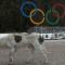 Sochi Olympic village dog