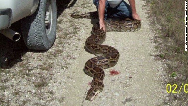 Yikes! 18-foot python found in Florida
