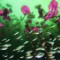Sony photo -winner Christian Vilz cenotes car wash