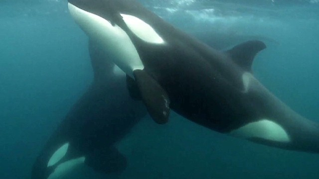 The backlash after 'Blackfish'
