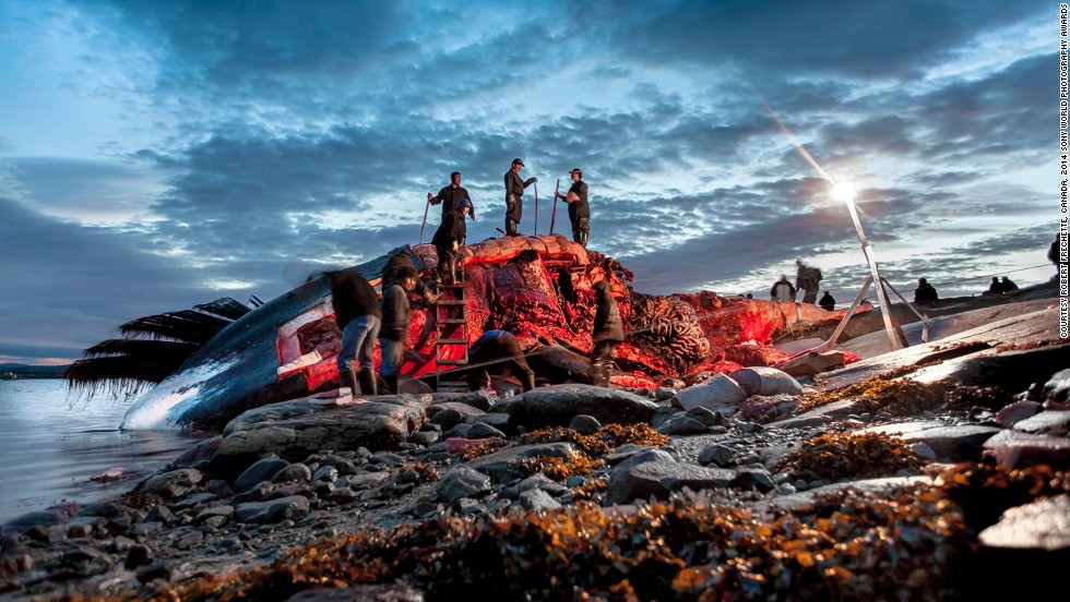 "<strong>Shortlist: Arvik! In pursuit of the Bowhead Whale</strong><br />Photo and caption by Robert Frechette<br />""Centuries ago, Inuit hunted the bowhead whale. At that time, whale hunting undoubtedly was part of a complex and very important ritual, if only because of the size of the catch. The position that the ancestors of today's Inuit occupied in the living world involved a relationship with the spirit that inhabited each animal but also their species. This resulted in a perpetual exchange where people imposed upon themselves many rules."""