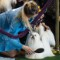 23 westminster kennel club dog show 0210