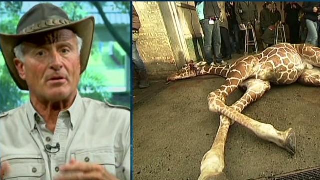 ac jack hanna on copenhagen zoo giraffe_00013020.jpg