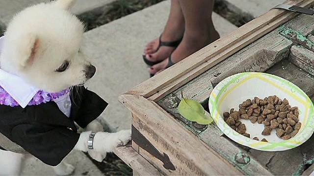 exp erin sot westminster dog show_00015513.jpg
