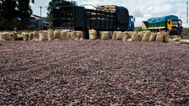 Freshly-harvested cocoa beans are spread out to dry in the sun