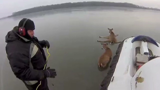 gopro deer hovercraft ice rescue _00002716.jpg