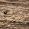 branson island bird