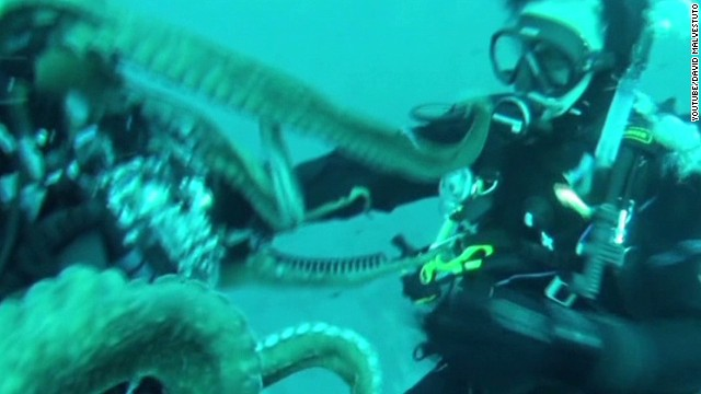 Octopus snatches diver's camera