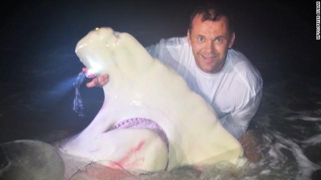 dnt angler catches hammerhead shark_00003508.jpg