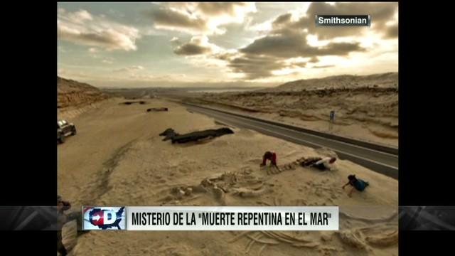 DUSA- Ballenas Atacama_00000707.jpg