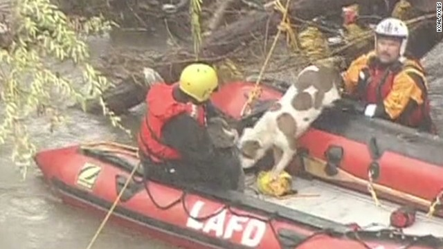 von dog river rescue california floods_00005603.jpg