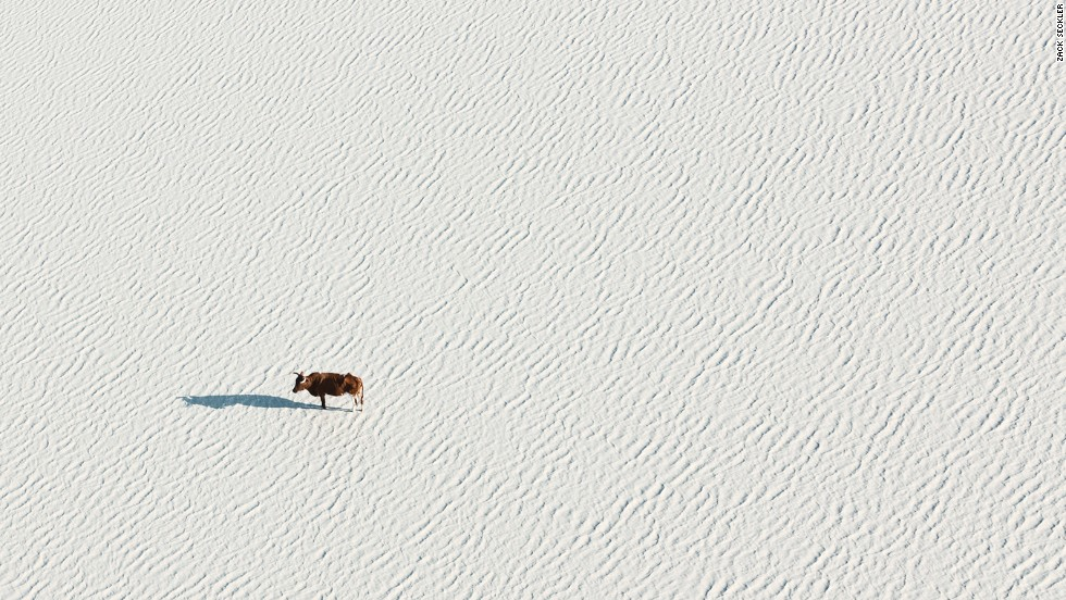 The abstracted landscapes and isolated animals are a particular visual approach that sets the work apart from much of the aerial photography most people see in newspapers, for example.