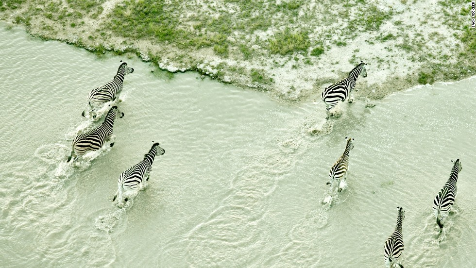 Botswana is home to one of the world's largest zebra populations.