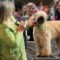 01 crufts dog show 2014 0307