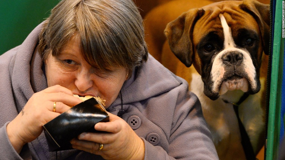 A boxer looks on as its owner eats her lunch March 6.