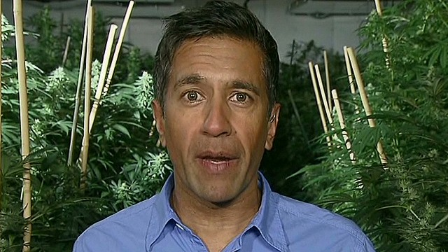 'Doubling down' on medical marijuana
