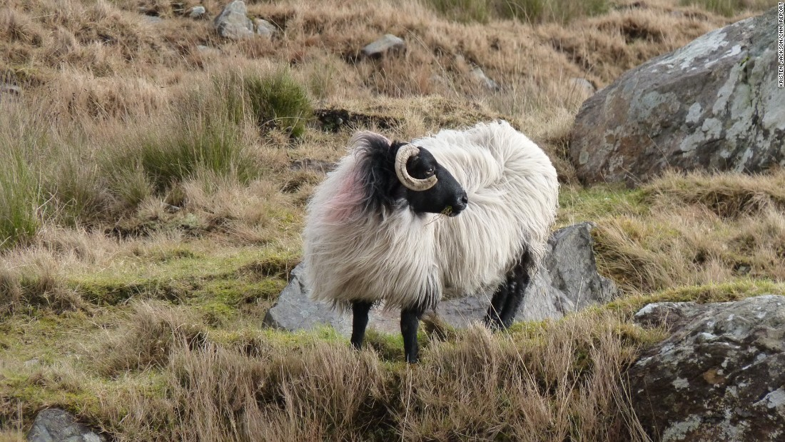 "<a href=""http://ireport.cnn.com/docs/DOC-1100301"" target=""_blank"">Kristen Jackson</a> said she couldn't put her camera down while in Connemara. ""There were sheep everywhere and it was like they were posing for me."""
