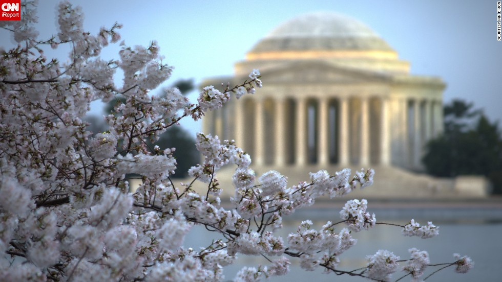 The Thomas Jefferson Memorial sits behind a blooming cluster of cherry blossoms.
