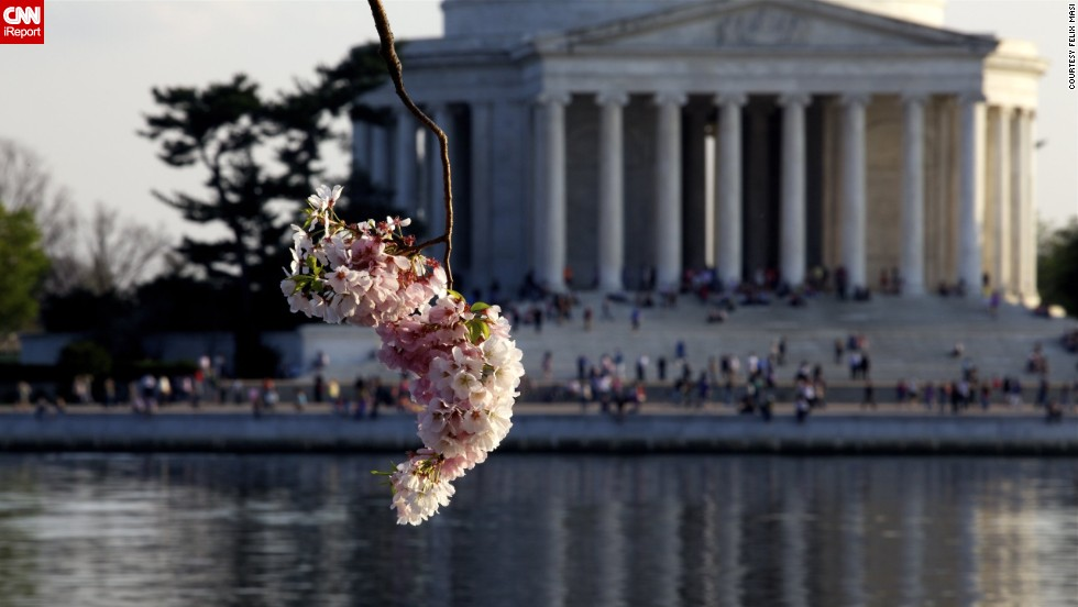 The National Park Service expects peak bloom to occur this year during the second week of April.