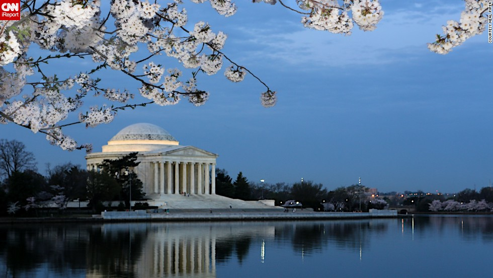 The cherry blossom season can last as long as 25 days.
