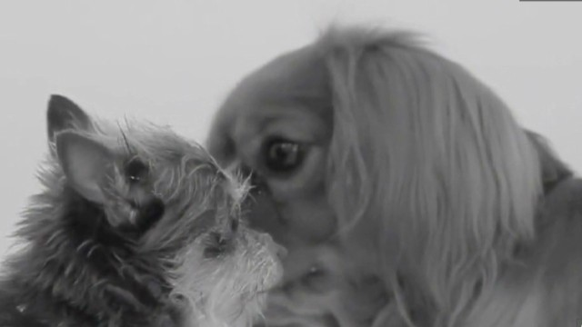 mxp first kiss parody dog video_00001025.jpg