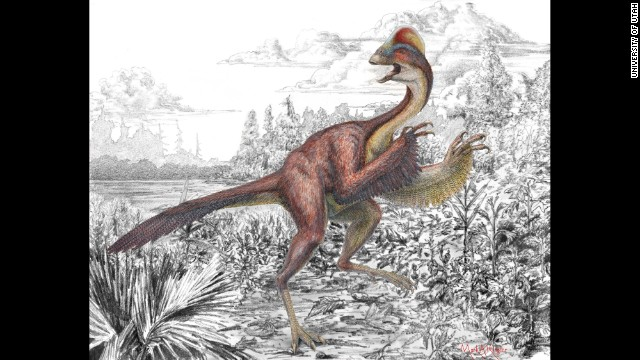 """University of Utah scientists discovered a new dinosaur that resembled a 500 pound, 11 foot chicken. They call it """"the chicken from hell."""""""