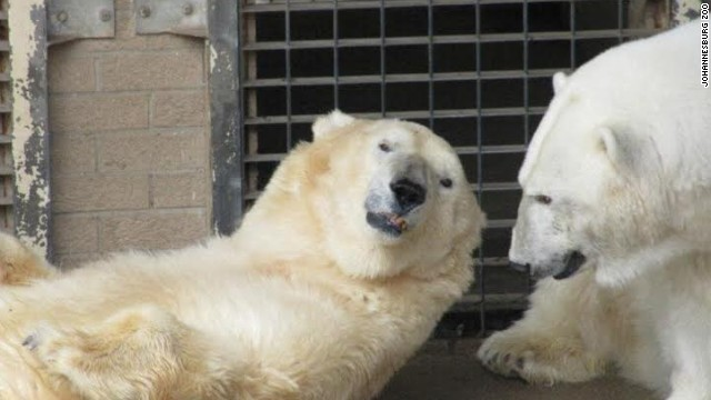 Wang, left, and GeeBee had spent their days together since they were cubs. GeeBee died of a heart attack in January.