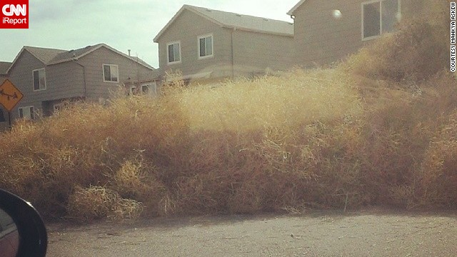 Tumbleweeds pile high in Mahkya Askew's neighborhood
