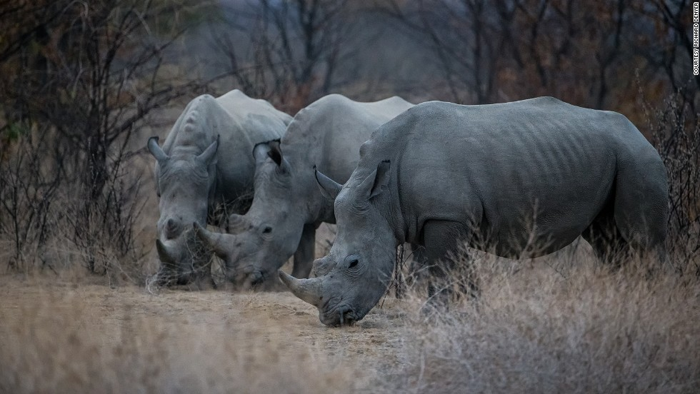 "Globally there were 12 million wildlife tourism trips in 2013 (the last full year of data available), and numbers are rising 10% annually, suggesting positive signs for the industry -- should it counter the existential threats to it, such as ""the dramatic increase<br />in poaching and illicit trade of wildlife products since 2005,"" which ""threatens to undermine conservation achievements,"" according to UNTWO."