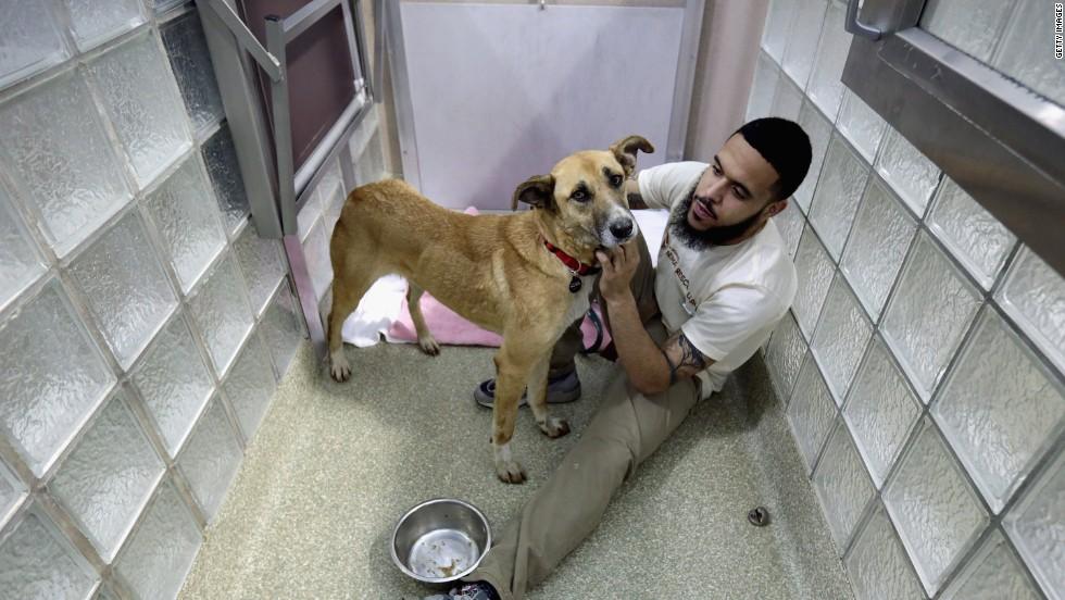 Washington Animal Rescue League's Miles Gray pets a stray dog from Sochi.