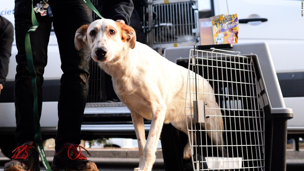 Each dog will get a medical evaluation. If all goes well, the dogs could be available for adoption within weeks.
