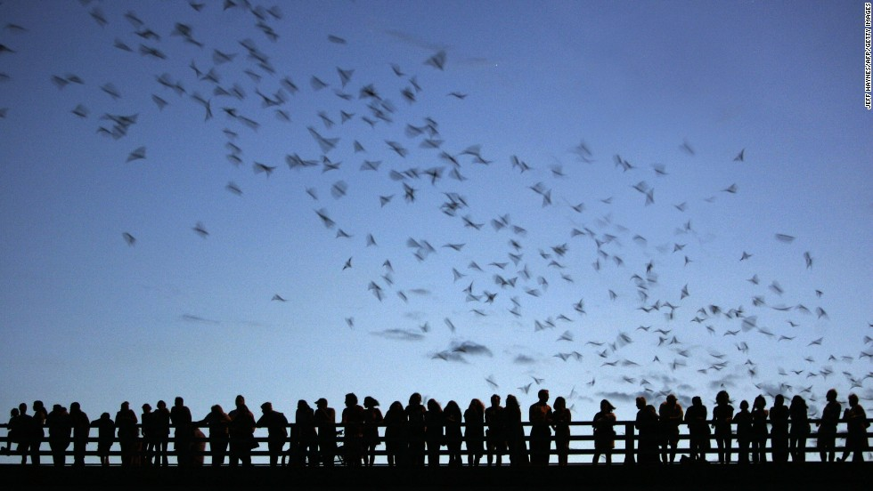 "The Ann Richards Congress Avenue Bridge in Austin, Texas, draws locals and tourists to see the <a href=""http://www.batcon.org/index.php/get-involved/visit-a-bat-location/congress-avenue-bridge/subcategory.html"" target=""_blank"">largest urban bat colony</a> in North America. Nearly 1.5 million Mexican free-tailed bats take up residence underneath the bridge in the spring and summer. Kids love a good, somewhat creepy, air show."