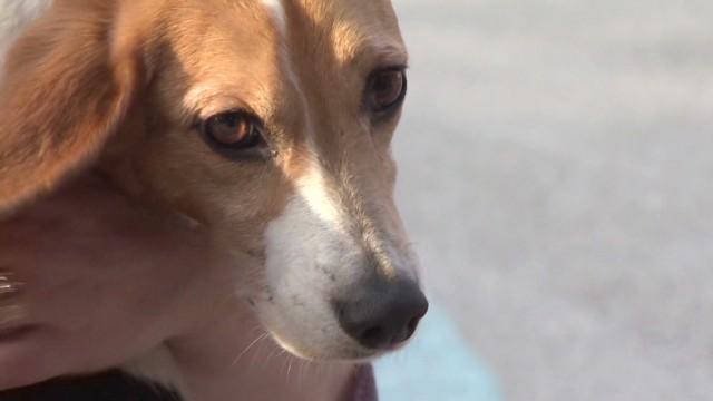 pkg beagle reunites with owner_00003324.jpg