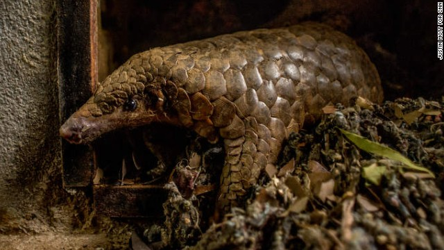 Inside the illegal wildlife trade
