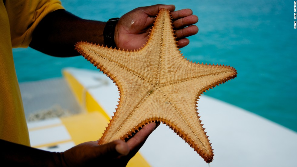 Starfish are abundant around the Exumas, a chain of more than 350 coral islands, some of which are owned by celebrities such as Johnny Depp.