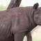 black rhino image