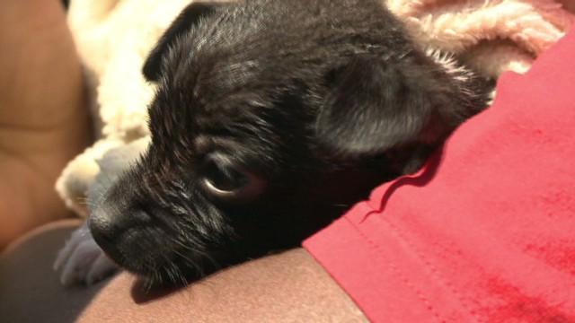 dnt ktvi puppy rescued_00013221.jpg