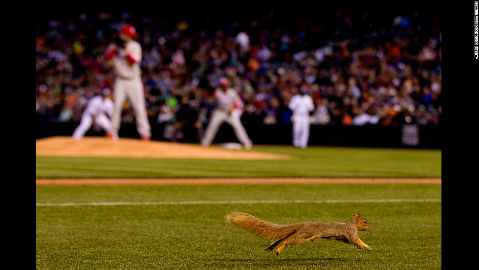 A squirrel runs on the infield during the fourth inning of a game between the Philadelphia Phillies and the Colorado Rockies on April 19 at Coors Field in Denver.