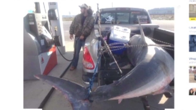 dnt mako shark caught_00003321.jpg