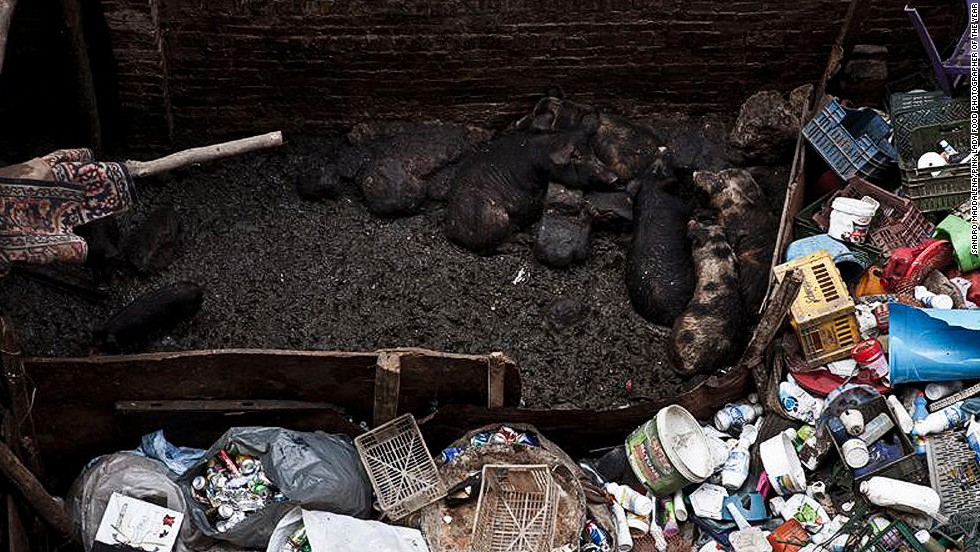 Dirt-blackened pigs in a sty surrounded by garbage in Cairo's Garbage Cities are shown in this image by photographer Sandro Maddalena. The photograph won the Politics of Food category.