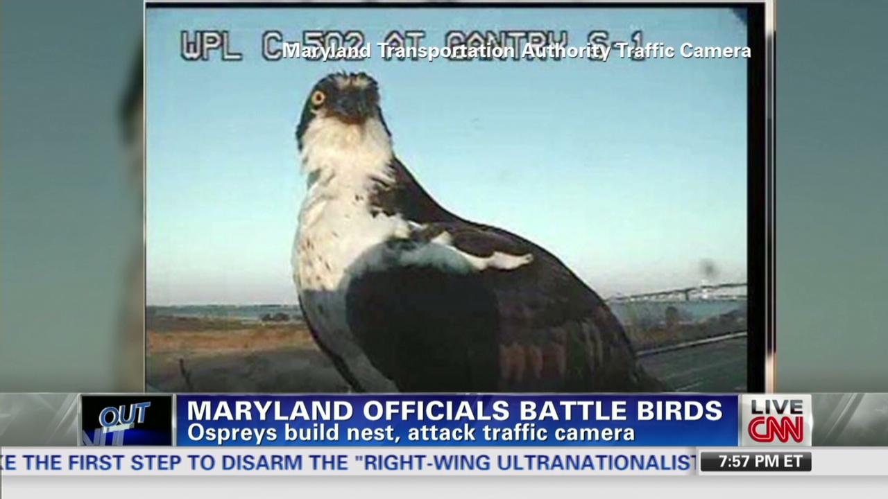 Birds take over Maryland traffic cameras - CNN Video