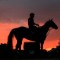 kentucky derby horse sunset