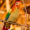 theme park attractions-The Enchanted Tiki Room