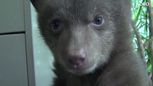 erin pkg moos bear cub solved_00003613.jpg