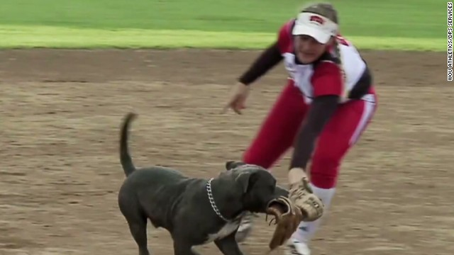 sot dog steals softball gloves during game_00003820.jpg