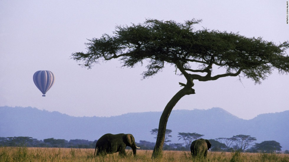 Enjoy a safe, aerial view of elephants, lions and other animals during a hot air balloon tour in the Serengeti, Tanzania.