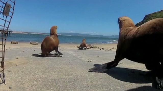 pkg sea lion released_00005027.jpg