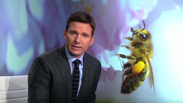 cnn tonight bill weir bee poop putin _00024316.jpg